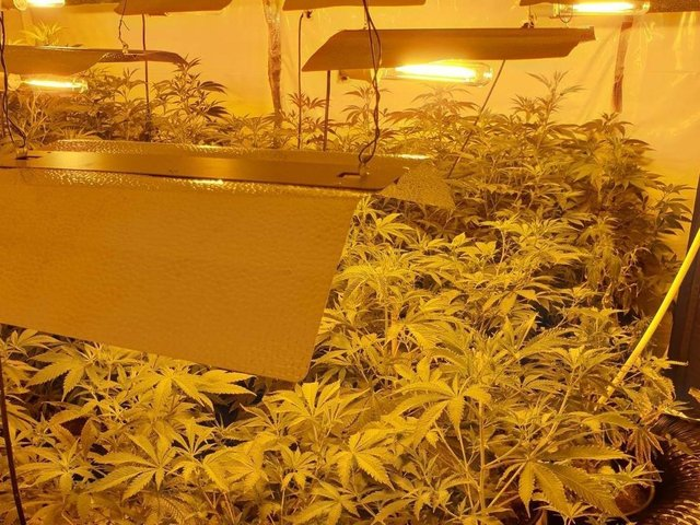 A second cannabis farm was uncovered in the Burnley Wood area of Burnley on Saturday afternoon (September 19). Pic: Lancashire Police
