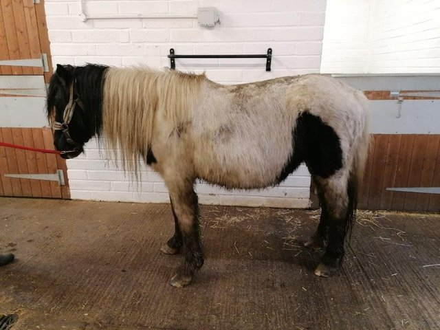 HAPPA is now taking care of this neglected mare and all she needs now is a name