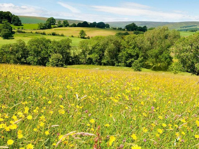 Bowland hay meadow. PIC: Graham Cooper