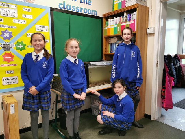 Pupils from St Mary's Roman Catholic Primary School, Chipping, looking after their Trout In The Classroom.