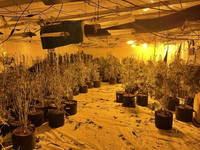 A substantial cannabis farm found in Burnley town centre premises presented a huge fire risk