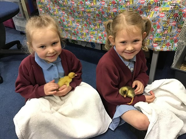 Skylar & Matilda with two of the newly hatched ducklings