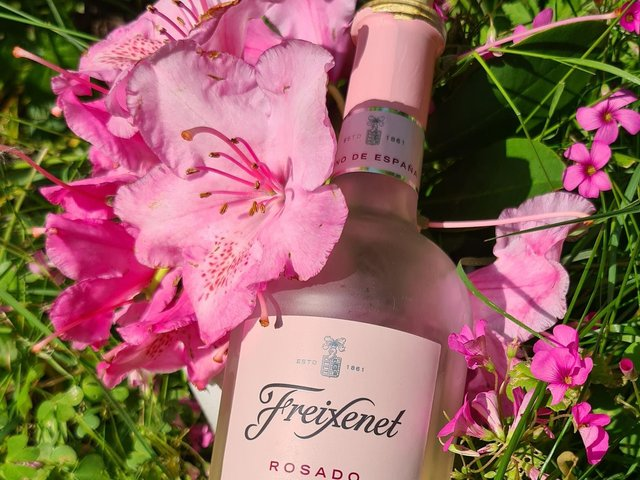 Freixenet Rosado is a tasty pink from Spain and it was perfectly pretty alongside the early summer rhododendrons